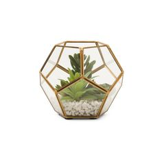 Mixed Succulent In Terrarium ($25) ❤ liked on Polyvore featuring home, home decor, floral decor, succulent plant terrarium and succulent terrarium