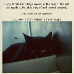 TO BE DESTROYED 4/24/15 *NYC* PRETTY BOY! * Manhattan Center * Betty White was brought in to us as a stray and looks like he really needs some TLC. He has a large wound at the base of the tail that needs to be taken care of and treated properly. He does not show aggression and did not hiss or scratch during intake. Come give this kitty all the love he needs! *   My name is MICKEY. ID # A1033489. I am a male black dom lh mix. I am 1 YR 6 MOS old.  I came in as a STRAY on 04/17/2015 from NY 10455