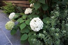 庭のある家は、誰にとってもあこがれですよね。庭にたくさんの植物を育てて、緑があふれる空間にしていく。 育てやす… Sustainable Design, Interior Design Living Room, Design Trends, Color Schemes, Backyard, Exterior, Landscape, Flowers, Green