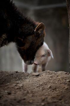Cute Baby Animals, Farm Animals, Animals And Pets, Beautiful Creatures, Animals Beautiful, Mundo Animal, Tier Fotos, Animal Rights, Four Legged