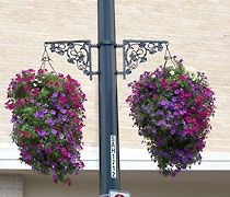 14 inch Hanging Baskets flower display