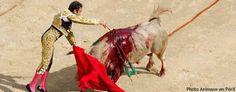 Corrida : le ministre de l'Intérieur interdit les manifestations aux abords des arènes. La Fondation Brigitte Bardot appelle à la désobéissance civile. Fondation Brigitte Bardot, France Europe, Animal Rights, Handle, Horses, Animals, Running, Civil Disobedience, Animales