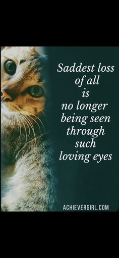 Baby Kitty, Baby Cats, Cats And Kittens, Pet Grief, Sleepy Bear, Pet Remembrance, Share My Life, I Love You Forever, Cat Memorial