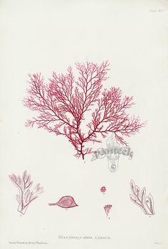 Seaweed print or possibly coral?