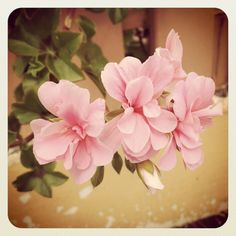 Pink petalled perfection...