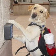 Freedom Service Dogs: Four-legged friends for Disabled Veterans