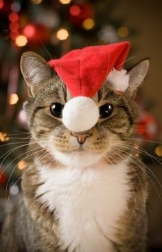 A Jolly Santa Paws:-)