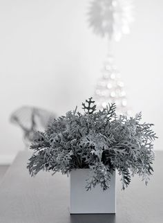 sleek white container of dusty miller brings a modern botanical look for a winter event Winter Floral Arrangements, Flower Arrangements, Table Arrangements, Minimal Christmas, Alternative Christmas Tree, Flower Festival, Dusty Miller, Winter Flowers, Jingle All The Way