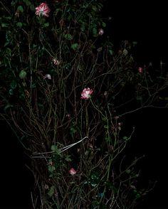 Review –Black in the Rose Garden: Sarah Jones at Anton Kern Gallery