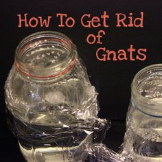 How to get rid of gnats --> bet you have everything you need for already!