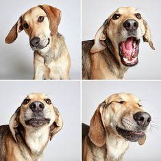 Fotógrafio perros de un refugio en una cabina fotográfica para conseguirlos adoptadas y los resultados son hermosos
