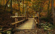 Grant Park by Lakshmi Venkatachari on Capture Wisconsin // Bridges