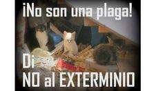"""Expliquen públicamente la retirada y """"sacrificio"""" de los gatos callejeros de la ciudad y reúnanse con las protectoras para consensuar un plan de gestión de colonias basado en el método de captura-esterilización-retorno."""