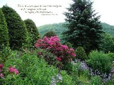 Mountains with Pink Flowers
