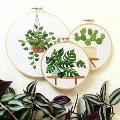 Gestickte Pflanzen Embroidered plants: Monstera, Cactus and more; green, green, green is all I sticke ♥ ️ l # green plants The post Embroidered plants appeared first on Puorton. Embroidery Hoop Crafts, Hand Embroidery Patterns, Embroidery Art, Cross Stitch Embroidery, Embroidery Designs, Cactus Embroidery, Embroidered Cactus, Art Patterns, Contemporary Embroidery