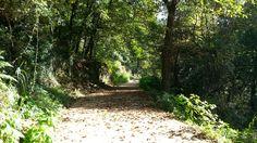 Paisaje senda del río Troncoso Trail Riding, Scenery, Fotografia