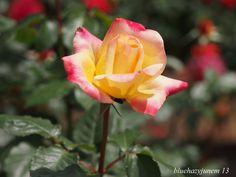 Taken at the Oofuna Flower Center. HBW!