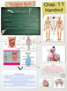 The human body is the entire structure of a human being and comprises a head, neck, trunk (which includes the thorax and abdomen), two arms and hands and two legs and feet. Every part of the body is composed of various types of cell. At maturity, the estimated number of cells in the body is given as 37.2 trillion. #Glogster #HumanAnatomy #HumanBody