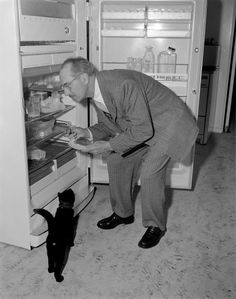 Groucho Marx bends down to look in the fridge while a black cat eagerly watches. Photo: Gene Lester,