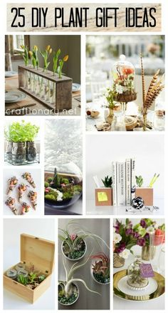 Learn how to gift a plant, succulent, herbs and flowers to guests, family and friends with DIY plant gift ideas for birthday, wedding, mothers day & more.