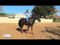 Freiheitsdressur ohne sattel reiten - Kenzie Dysli