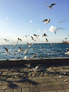 "Port of Izmir"". Wonderful Places, Beautiful Places, Turkey Photos, Istanbul Travel, Travel Tags, Grunge Photography, Paradise On Earth, Winter Scenery, Turkey Travel"