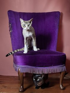 StyleTails speaks to London-based photographer Louise Haywood-Schiefer about her captivating Cat Portraits Project Devon Rex, Marcel, Diy Cat Bed, Diy Cat Toys, Bengal Kitten, Cat Tags, Super Cat, Louise Hay, Cat Memorial