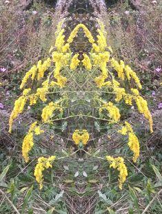 SpiegelBilder aus dem Garten im Himmelreich des Ortes, in dem die Götter Schach spielen Plants, Outdoor, Mirror Image, Joie De Vivre, Heavens, World, Lawn And Garden, Pictures, Outdoors