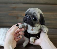 23 Ideas Baby Animals Real Doggies For 2019 Cute Baby Pugs, Baby Animals Super Cute, Cute Dogs And Puppies, Cute Little Animals, Baby Dogs, Cute Funny Animals, Black Pug Puppies, Doggies, Baby Animals Pictures