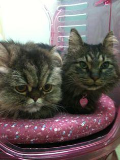 Mimi & Chocho
