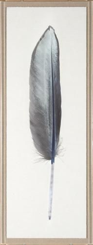 Sterling Feather 1 | Natural Curiosities