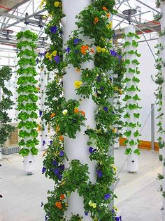 This greenhouse utilizes aeroponic towers. Flowers and lettuce are among the crops being grown.