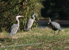 Beim Mittagsspaziergang beobachtet ! Animals, Animales, Animaux, Animal, Animais