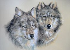 Pastel drawing of two wolves. As you can tell, I misjudged the size as I couldn't quite fit the ears in! But it was still fun to do Wolf study 2 Beautiful Wolves, Animals Beautiful, Animal Sketches, Animal Drawings, Wolf Husky, Two Wolves, Wolf Artwork, Wolf Painting, Fantasy Wolf