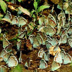butterflieshttp://pinterest.com/search/?q=butterflies#