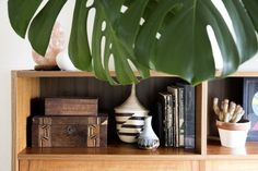 The Ultimate Guide to Never Killing a Houseplant Again