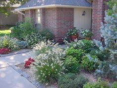 We need to bushes like these for the yard they'd be perfect for this dry area