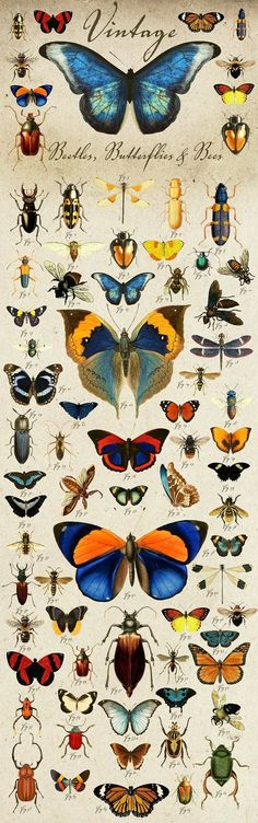 Vintage Beetles, Butterflies & Bees by Eclectic Anthology on @creativemarket