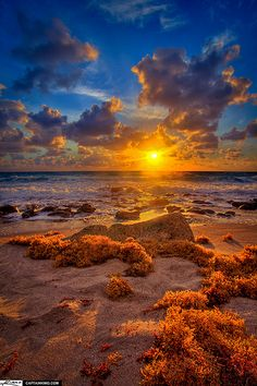 Sun Rise Burning Seaweed at Carlin Park Beach Jupiter Florida