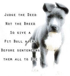judge the breed not the deed - pit-bulls Photo