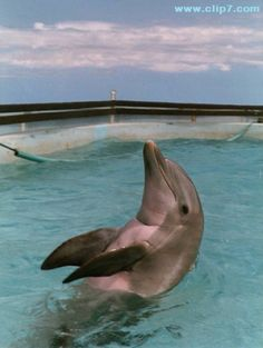 * Dolphins