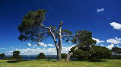 Brijuni National Park - The Hidden Paradise ...