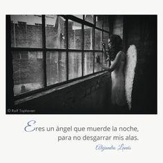 Eres un ángel que muerde la noche, para no desgarrar mis alas. #Aforismos