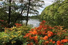 The gorgeous old park next to Motala river   Motala ström, Norrköping