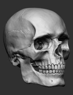 European Male Skull, Amanda Marson on ArtStation at https://www.artstation.com/artwork/european-male-skull