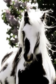http://animalsworld89.blogspot.com/