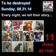 TO BE DESTROYED - 08/30/14 PITTIES ARE IN DANGER AGAIN. ALL THESE DOGS COUNT ON US!!! LET'S NOT LET THEM DOWN!!! PLEASE OPEN YOUR HEARTS AND PLEDGE, TAKE THEM HOME, BUT BE QUICK AS TIME IS TICKING AWAY. PLEASE BE QUICK WHEN MAKING UP YOUR MIND!!   https://www.facebook.com/Urgentdeathrowdogs/photos/a.611290788883804.1073741851.152876678058553/862832293729651/?type=3&theater
