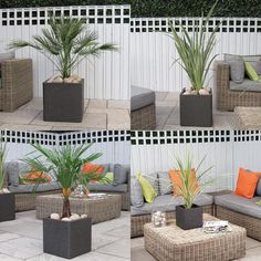 Palm Tree Instant Garden Set Complete As Shown Delivered To Your Door - Tropicana 1 Set  #trees #olivetrees #baytreewedding #palmtrees #wetmyplants #gardendesign #houseplants #indoorplants #baytree
