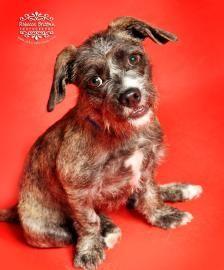 28 Best Humane Society Of Fremont County Animal Adoption Images Animals Humane Society Adoption