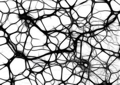 Free illustration: Neurons, Brain Cells - Free Image on Pixabay ...: